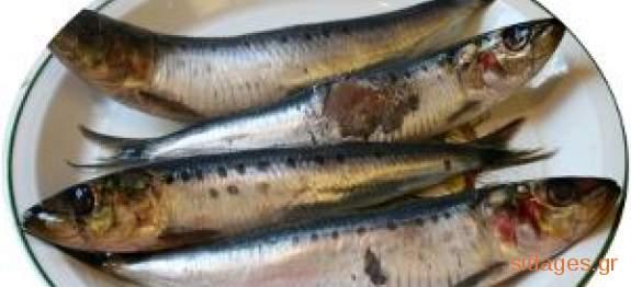Σαρδέλες παστές σπεσιαλιτέ =www.sidages.gr
