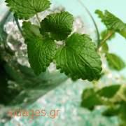 Κοκτειλ μοχιτο -  Mojito - συνταγές για κοκτείλ