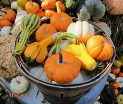 συνταγές μαγειρικής & ζαχαροπλαστικής- www.sidages.gr
