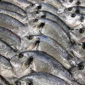 Ψάρια και διατροφή - συνταγές μαγειρικής